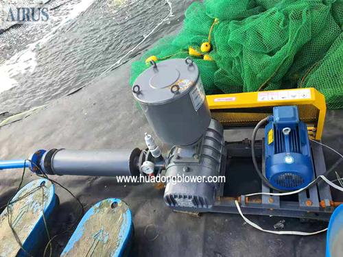 HDLH series roots blower for aquaculture aeration